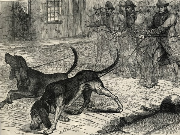 Victorian Bloodhounds
